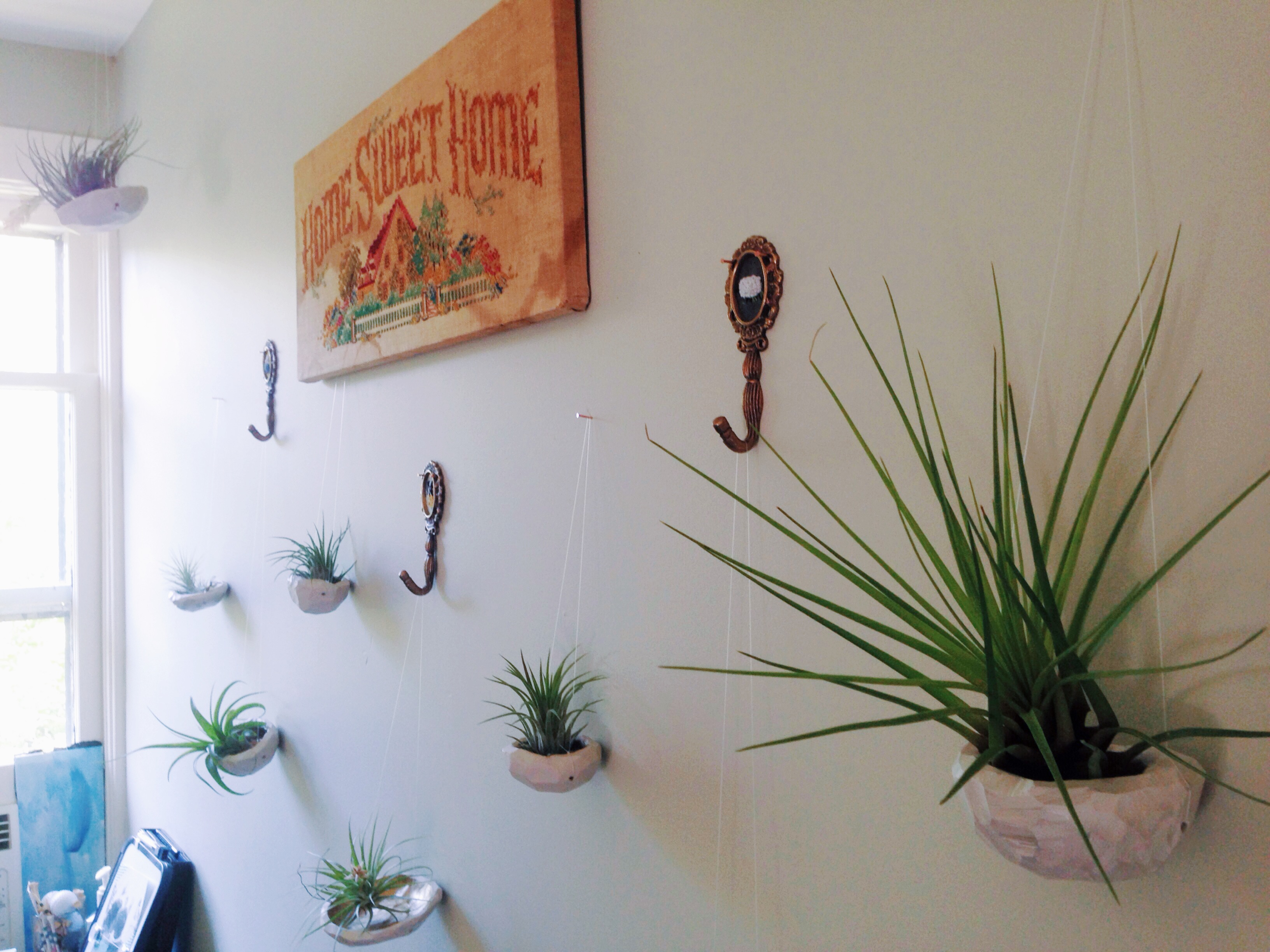 Air Plant Wall Display 12 Months Of Making
